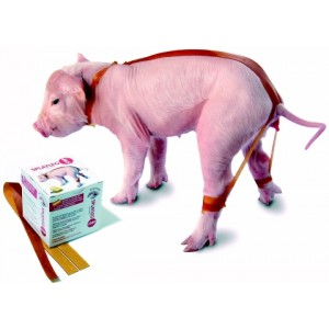 Bandages SPLAYLEGSTOP